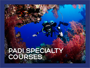 PADI Specialty Courses Hero