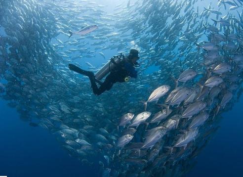 Diving in Bali Fish Tornado