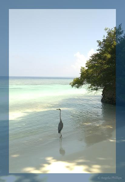 Crane on beach at Bandos