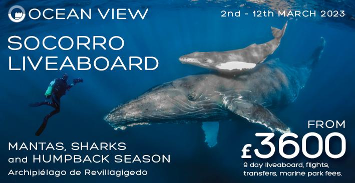 Dive Club Newsletter Socorro post header