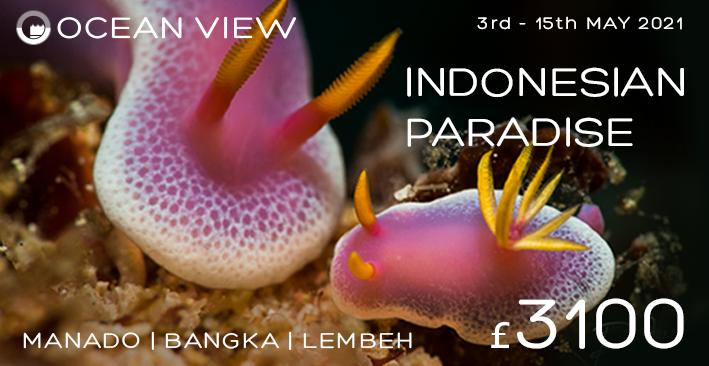 Indonesia Passport to Paradise