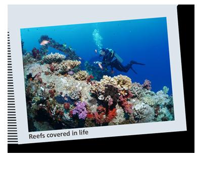 Red Sea 2021 Polaroid 5