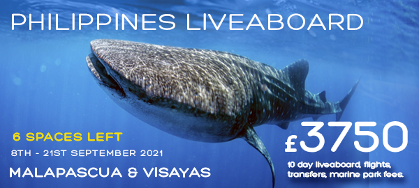 Philippines Liveaboard September 2021